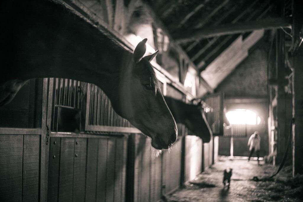 Tierhaltung Pferdeboxen mit Kunststoffplatten