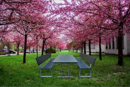 Sitzgruppe Outdoor für Parkanlagen